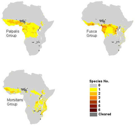 essay on diseases in africa Disease in africa the fact remains that lowland, tropical africa may well have the most intractable disease environment in the world(bohannan & curtin,35) in order.